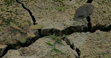 Gras wächst auf dem Boden eines ausgetrockneten Teiches durch Trockenboden