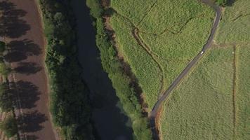Río y campos de caña de azúcar, vista aérea de Mauricio