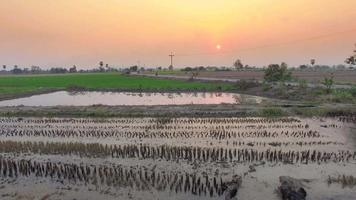 Aerial of rice field with sunset video
