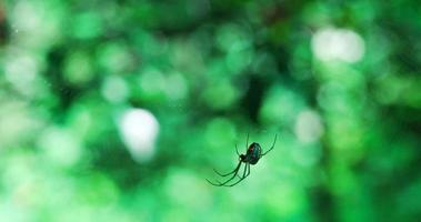 ragno scappa