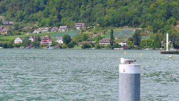 vista lago svizzero sulla montagna delle alpi, svizzera video
