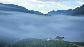 piantagione di tè in vista mattina, lasso di tempo