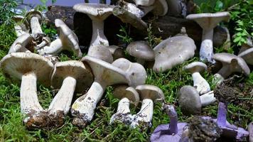 Auswahl an Pilzen.