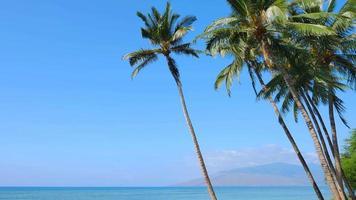 palmeiras, céu azul e praia de areia, tropical