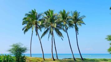 4k palmeiras isoladas na praia de areia, fundo azul do oceano