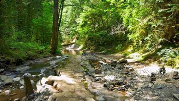 riacho suave escorre pela paisagem de floresta montanhosa, musgo e samambaias video