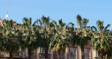 palmeras de la ciudad europea moviéndose en el viento 4k