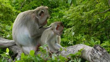 macaco em uma árvore