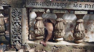 scimmia seduta tra i pilastri della ringhiera in pietra