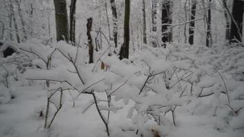 opinión de ángulo baja, de, bosque cubierto de nieve video
