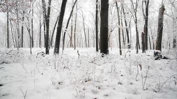 neige fraîche tombant dans une belle forêt couverte de neige