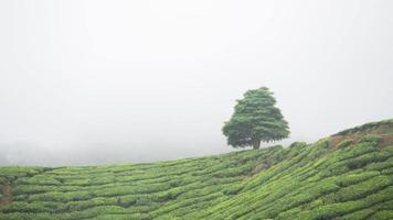 timelapse di nuvola in movimento sulla piantagione di tè