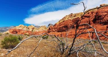 montaña con lapso de tiempo de árbol muerto video