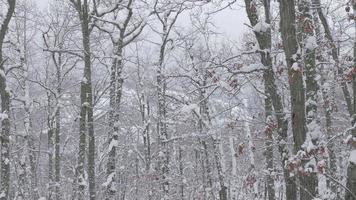 paysage d'hiver serein