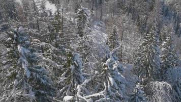 4K Aerial: Reveal of a Winter Mountain with Spruce Forest in Foreground video