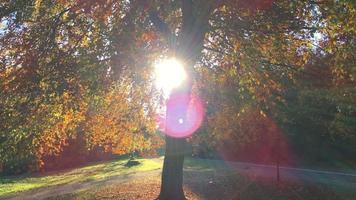 Soleil d'automne derrière la cime des arbres silhouette