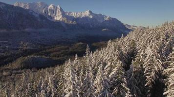 Magnificent Mountain Forest Aerial on Sunny Day with Blue Sky Behind Peaks video