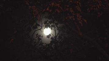 luna llena en la noche sin nubes