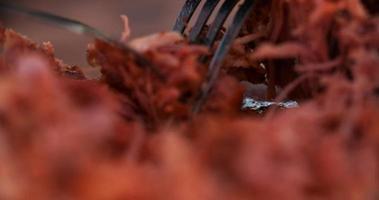 maiale tirato su una tavola di legno vintage dall'aspetto deliziosamente tenero