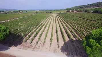 Francia, provenza, var, vista aérea del viñedo en ramatuelle