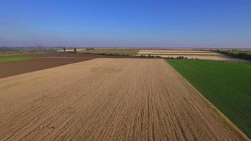 Aerial shot of a wheat field