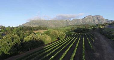 vista aerea del pittoresco vigneto con le montagne sullo sfondo