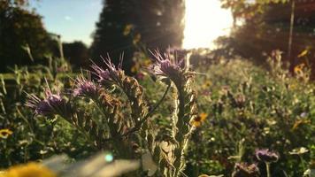 herbstliche Blumen im hübschen Park am sonnigen Tag