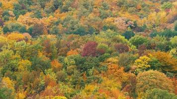 Colorful autumn forest, top view