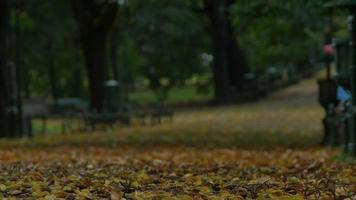 folhas de outono no parque video