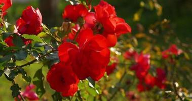 soleil lumière rose rouge 4k espagne