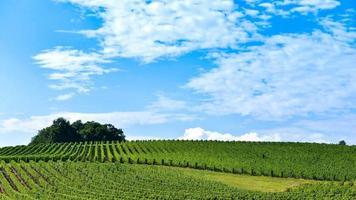 Vineyard Sunrise-Cloud and Blue Sky - Bordeaux Vineyard - Time Lapse video