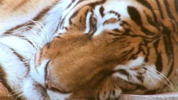 zoo1 video