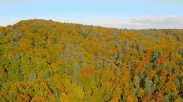 Antenna 4K: totale sulla foresta colorata