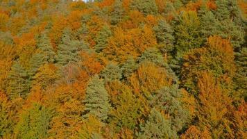 Antenna 4K: sollevamento posteriore sopra la foresta colorata in autunno