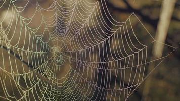 Spinnennetz mit Morgentau während eines Sonnenaufgangs im Marschland