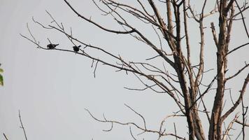 dos pájaros sillouettes sentado en un árbol