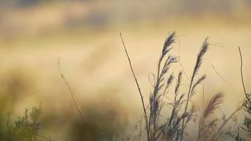 Grass in a Field Background