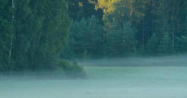 lasso di tempo di nebbia mattutina che scorre su un campo