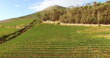riprese con drone di azienda vinicola