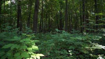 floresta, folhas em primeiro plano ao vento