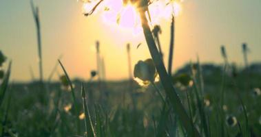 Sonnenuntergangswiese
