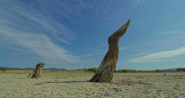 Time lapse with death tree and drought disaster, dry soil. Climate change, global warming