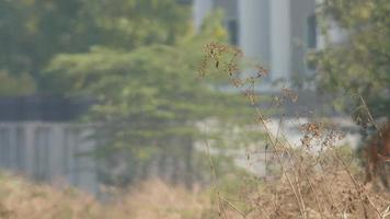 uccello nella prateria calda vicino all'edificio