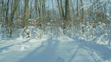 inverno nella foresta innevata, lasso di tempo di cursore motorizzato. scatto grezzo hdr