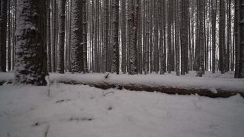 Caméra glissant le long de l'arbre tombé couvert de neige dans la forêt de grands pins
