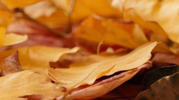 folhas de outono vermelhas e amarelas desbotadas