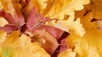folhas de outono amarelas e vermelhas