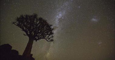 Laps de temps 4k d'étoiles en mouvement et arbre carquois en silhouette