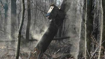 misterioso bosco fumante all'alba con albero rotto, birdhouse