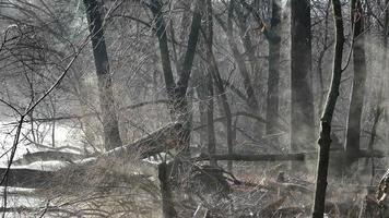 misteriosa foresta fumante all'alba con albero spezzato, voliera